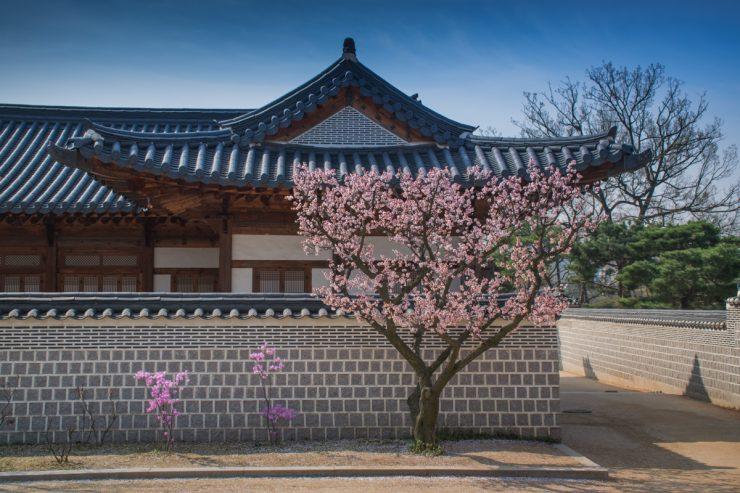 Cerisier en fleur dans un des palais de Séoul