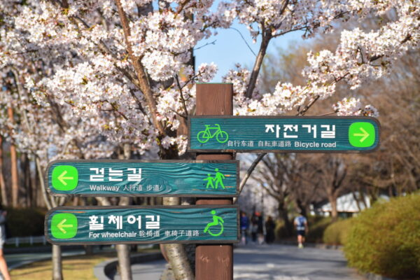 Parc Yeouido pendant la floraison des cerisiers
