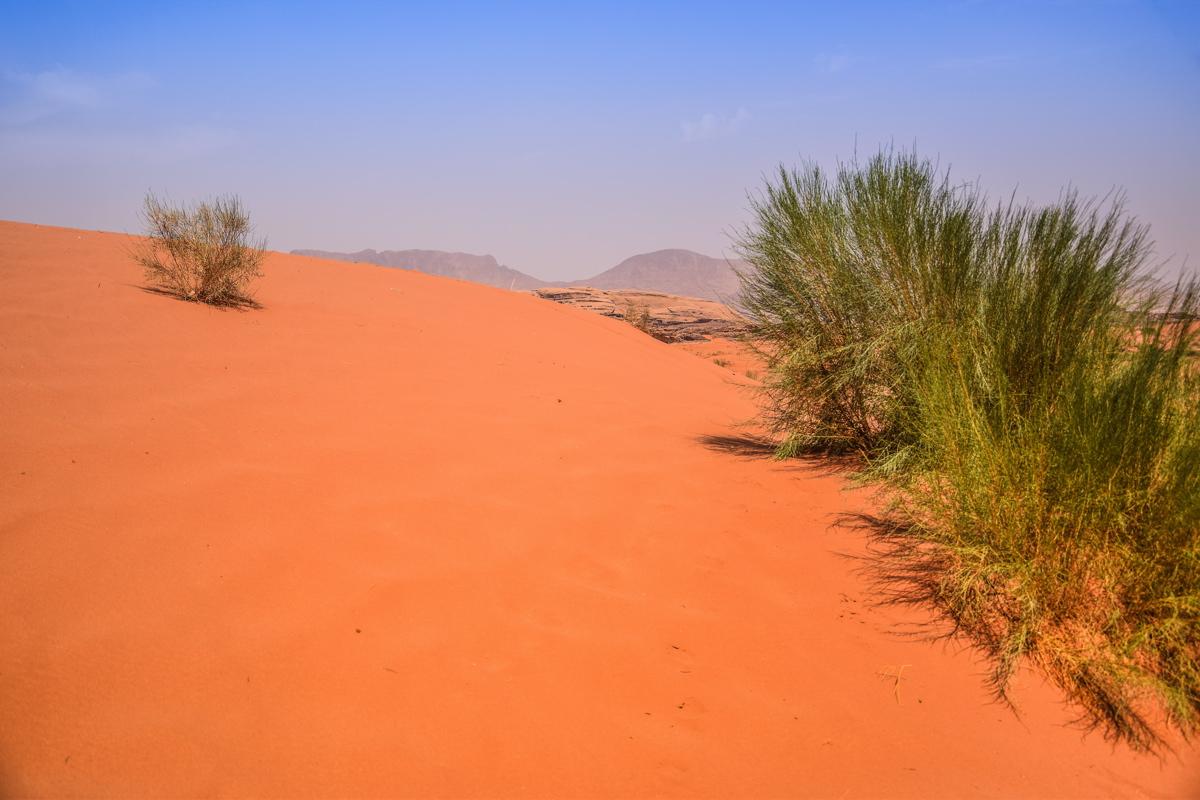 Dune de sable - Wadi Rum