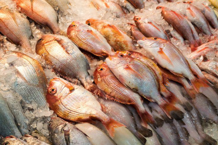 Fresh fish - Jagalchi market, Busan
