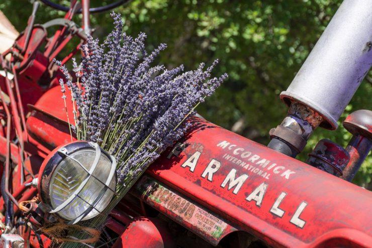 Tracteur décoré pour la fête de la lavande