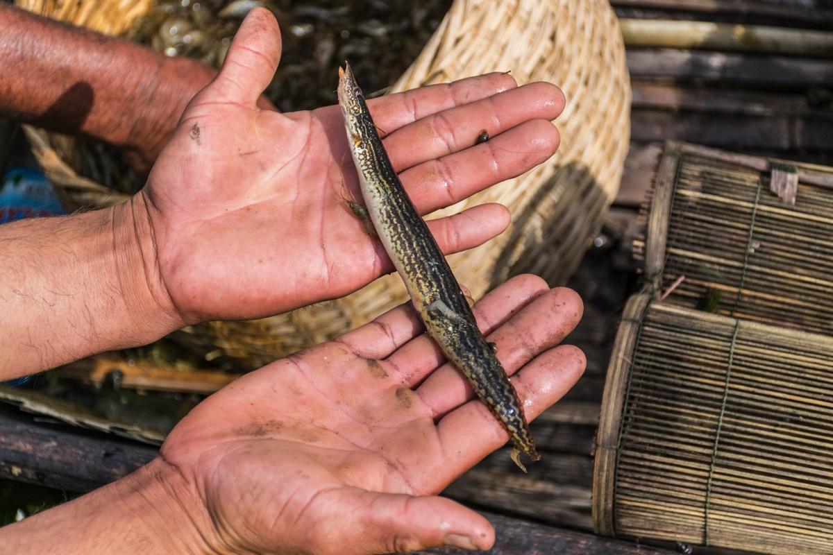 Pêche sur le lac Inle en Birmanie