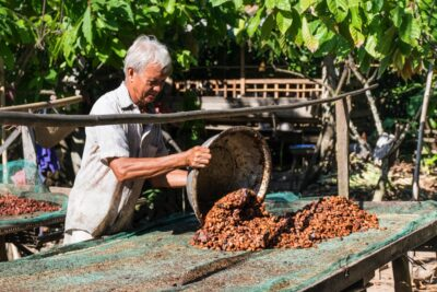 Séchage des fèves de cacao