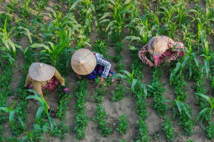 Dans les champs proches du pont U Bein