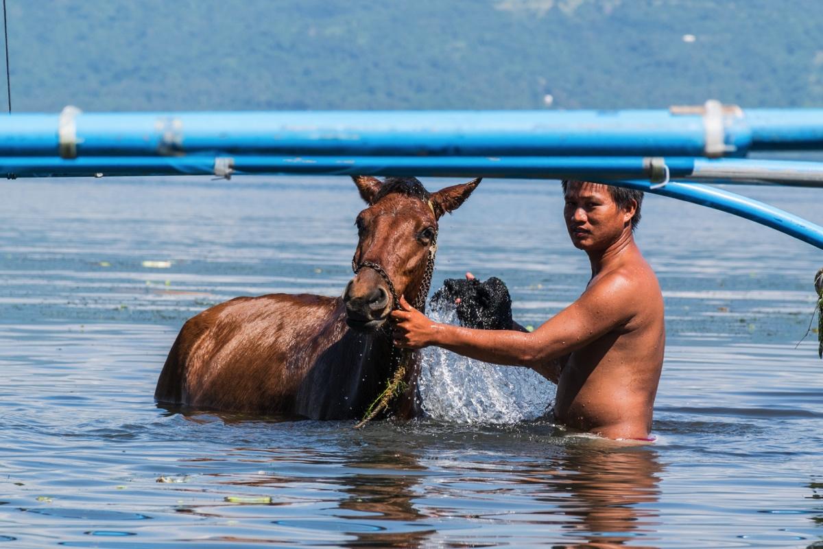 Homme lavant son cheval dans le lac du volcan Taal