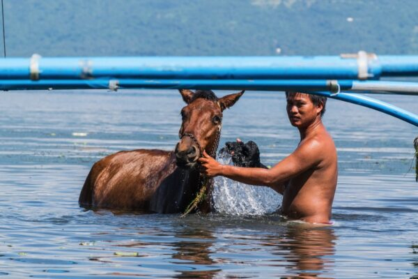 Dans le lac Taal aux Philippines