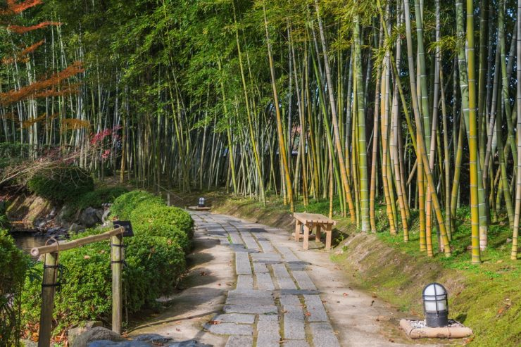 Bambous dans une allée du jardin Shokado de Yawata