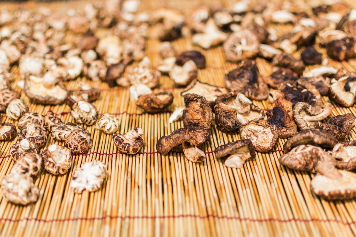 Champignons fraichement récoltés au temple Bongjeongsa