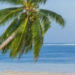 Coconut tree - Isla Cabana, Siargao