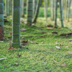 Mousse et bambou