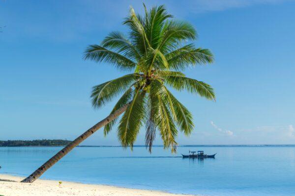 Palmier et plage à Siargao
