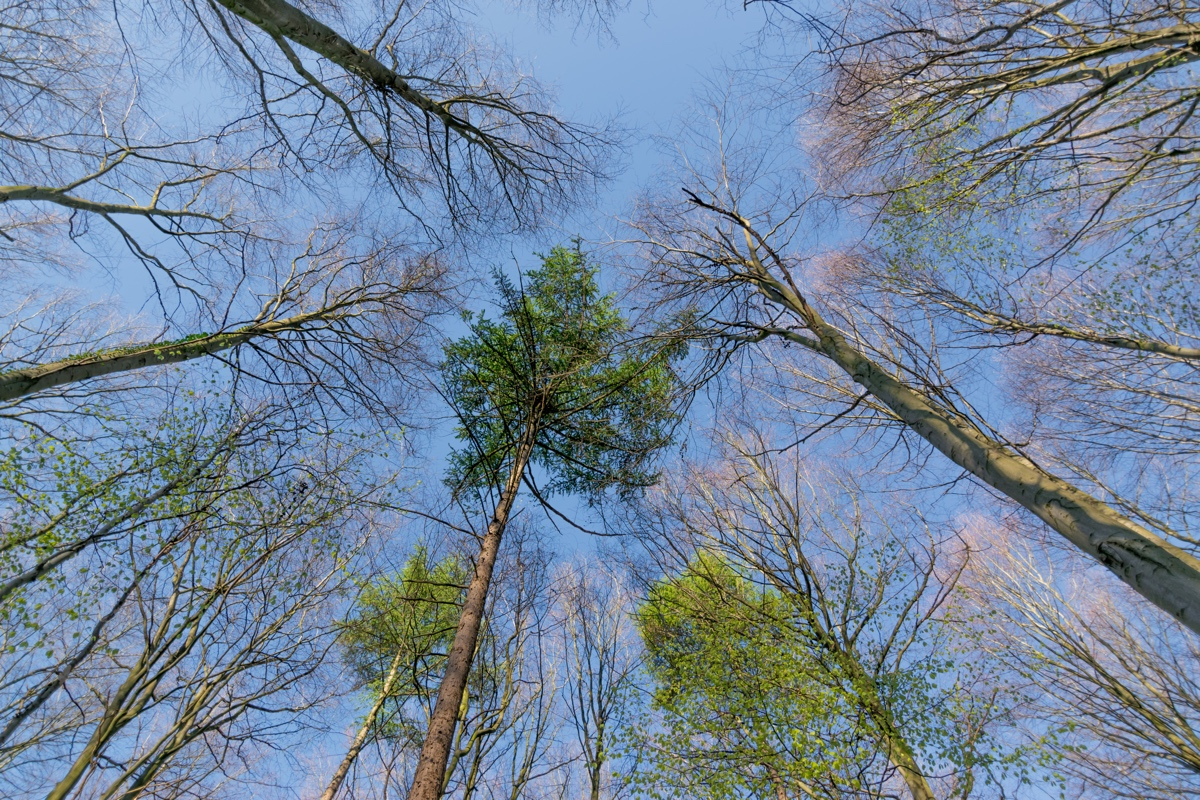 Bois de Hal et ses arbres