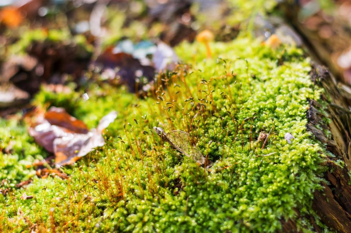 Hallerbos bois de hal et son tapis de jacinthe blog de voyage voyage way - Mousse dans les urines ...