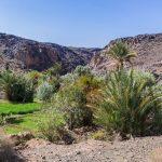Oasis de Sidi Flah - Maroc