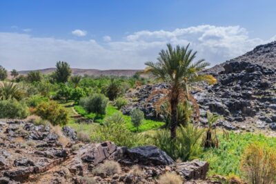 Oasis de Sidi Flah près de Skoura