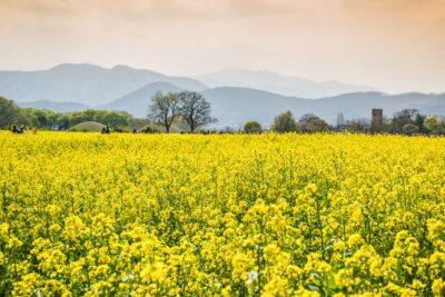Coucher de soleil à Gyeongju