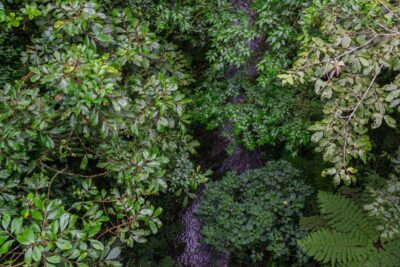From the canopy - Costa Rica