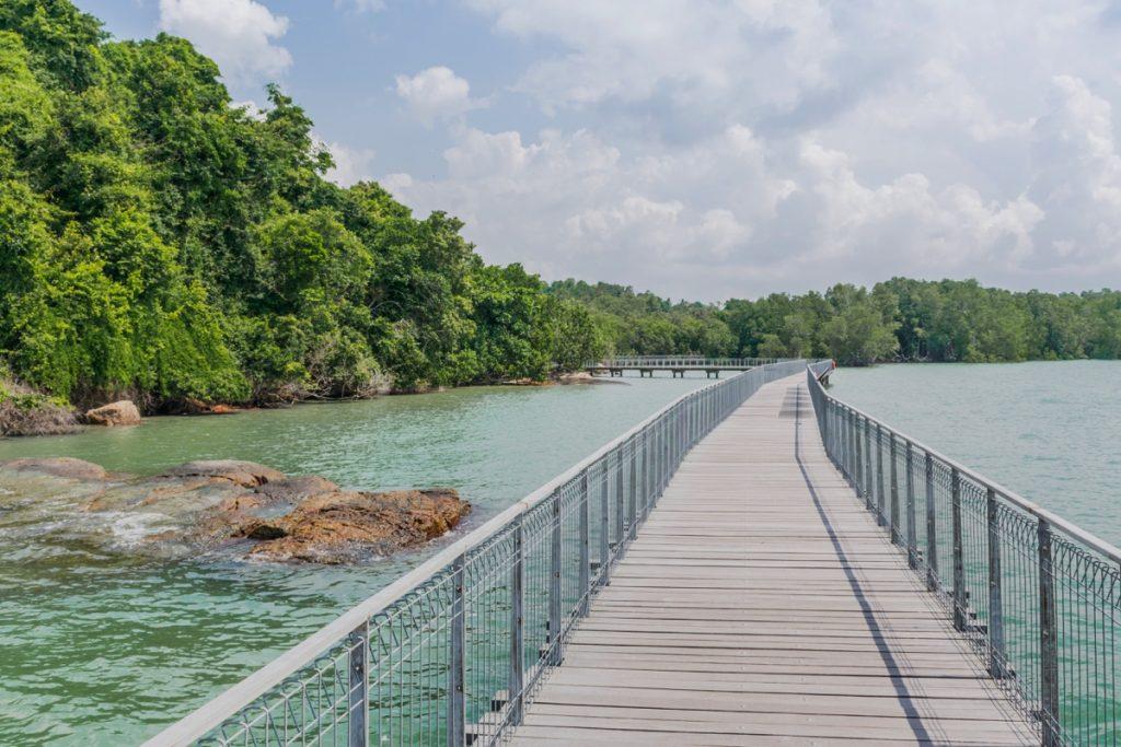 Mangrove de Pulau Ubin