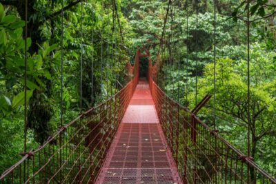 Pont suspendu - Canopée
