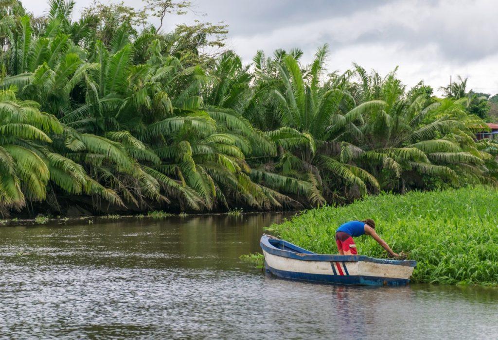 Rio Sierpe au Costa Rica
