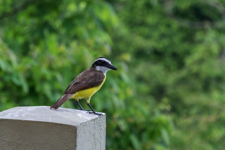 Oiseau à la Casa Chameleon de Malpais