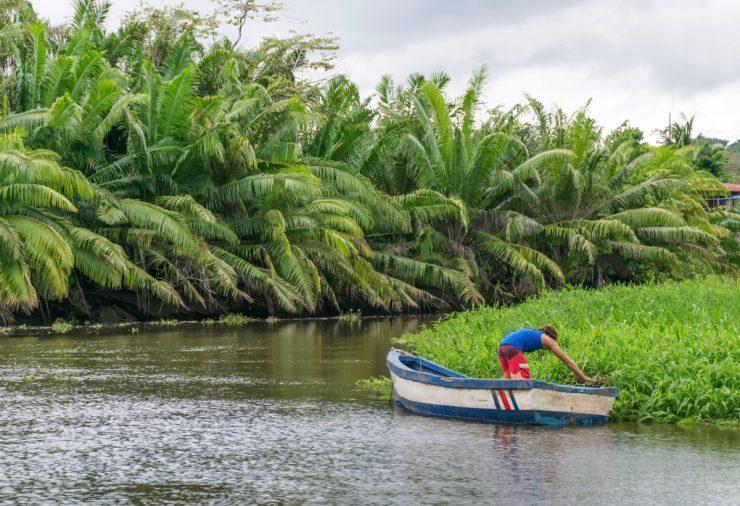 Pêcheur à la nasse sur le Rio Sierpe