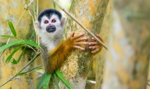 Observer la faune du Rio Sierpe