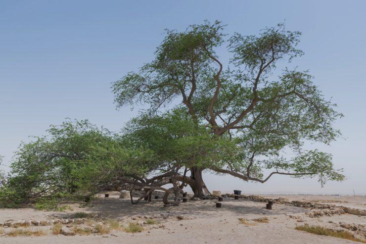 Tree of Life - Bahreïn