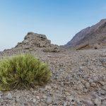 Au pied du Jebel Hafeet