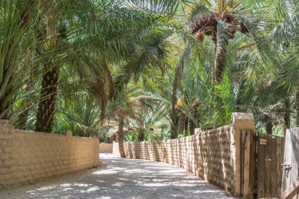 Oasis d'Al Aïn, UAE