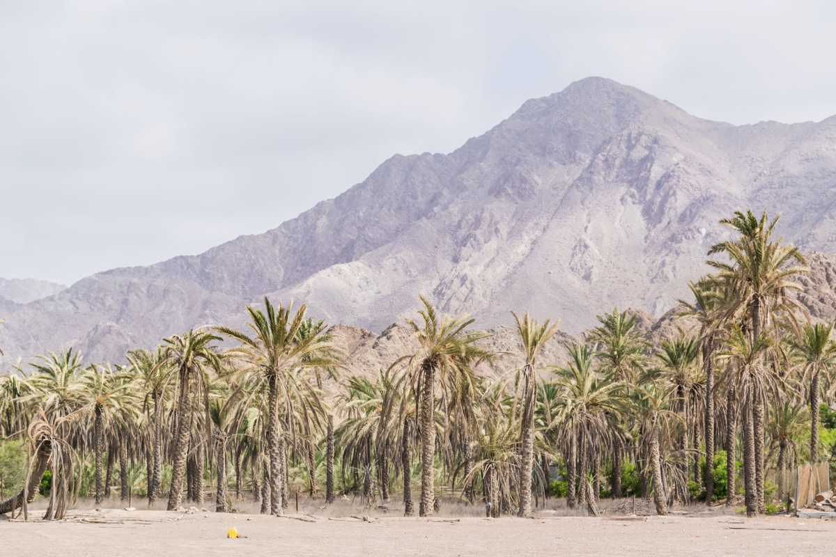 Paysage vu lors d'un road trip aux UAE