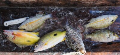 Fruit de la pêche à Zanzibar