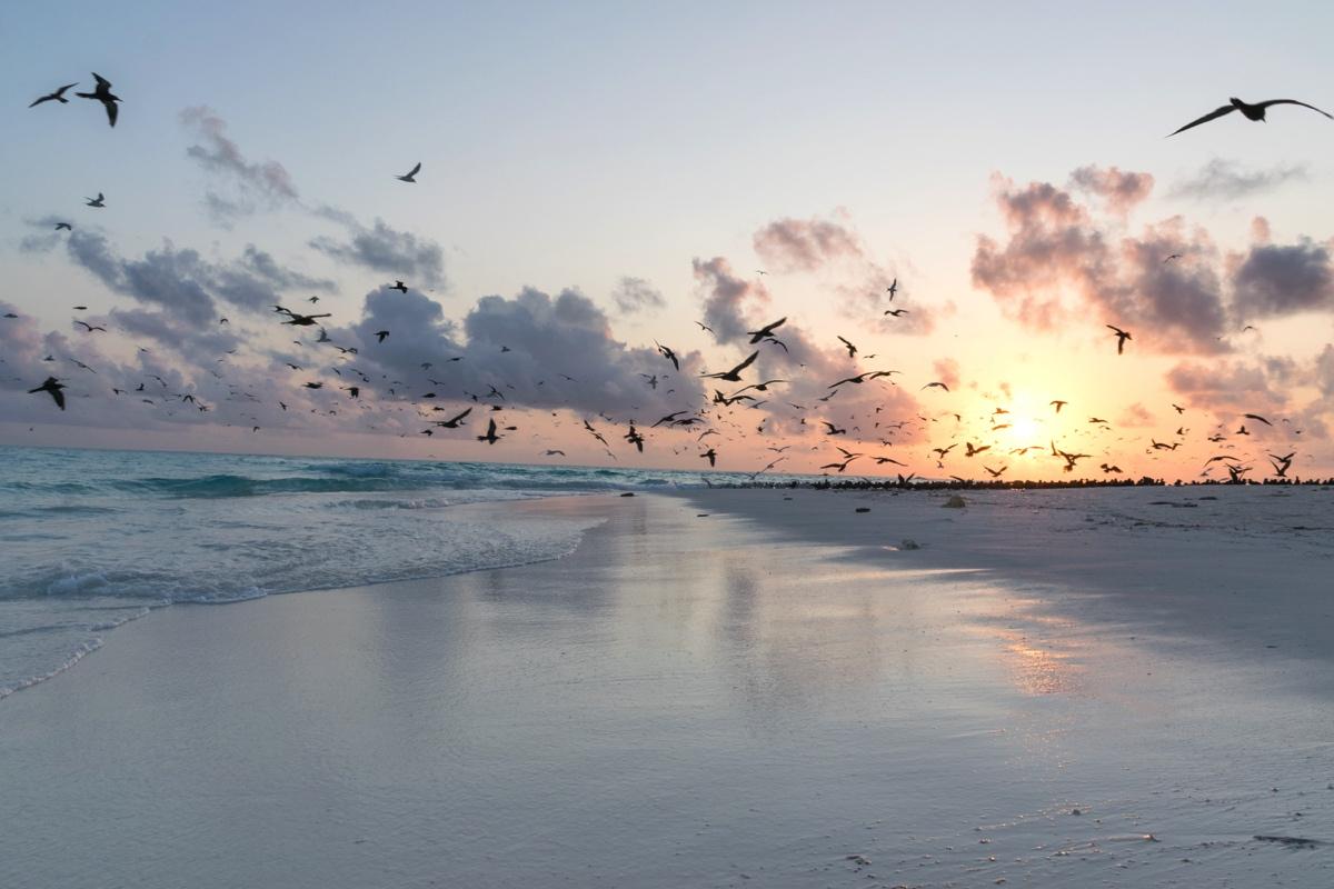 Lever de soleil sur Mnemba Island