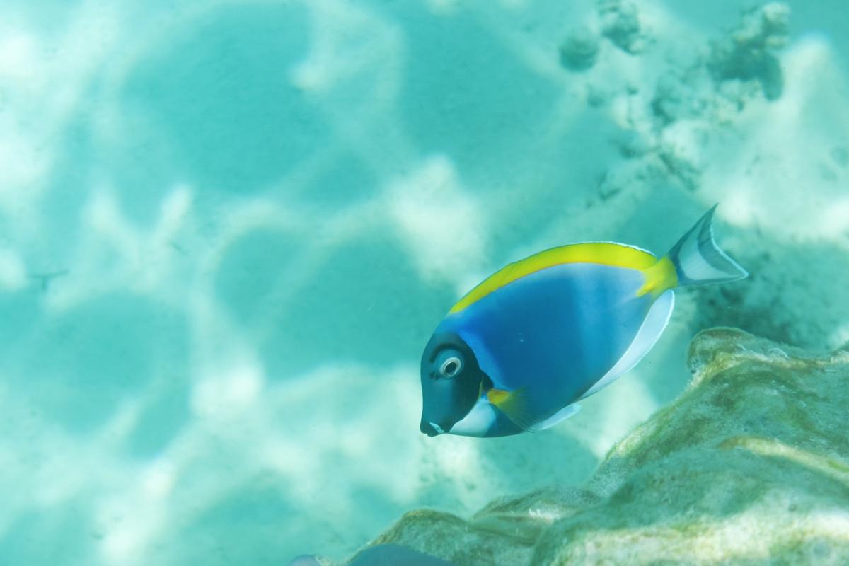 Plongée à Mnemba Island