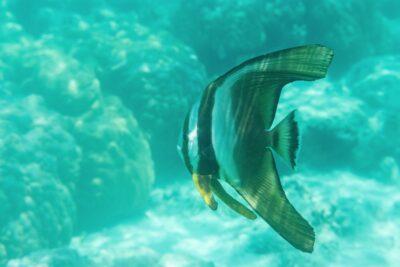 Snorkeling à Mnemba Island