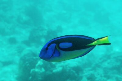 Snorkeling à Mnemba