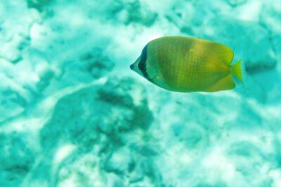 Snorkeling autour de l'île de Mnemba à Zanzibar