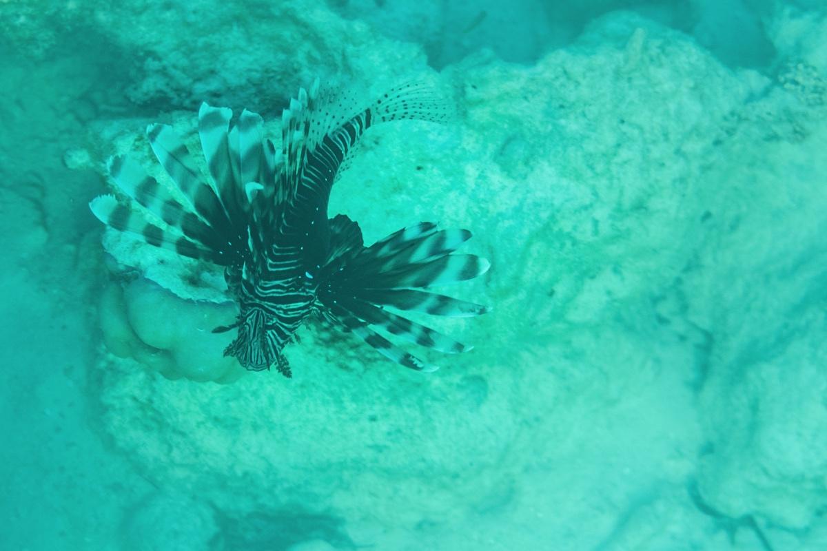 Snorkeling à Zanzibar en Tanzanie