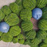 Vue plongeante sur les jardins d'Etretat