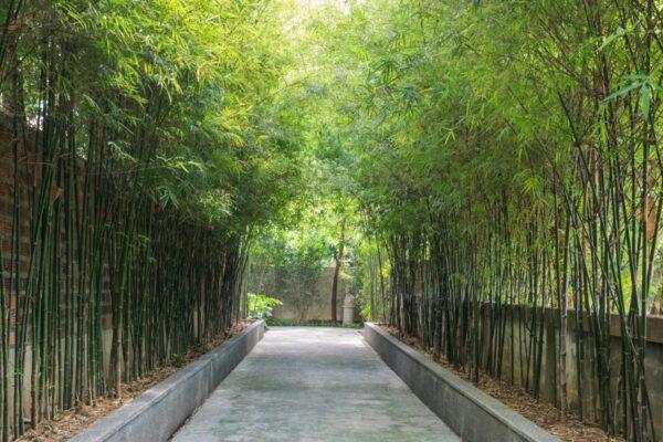 Allée de bambous à l'hôtel Villa Mahabhirom