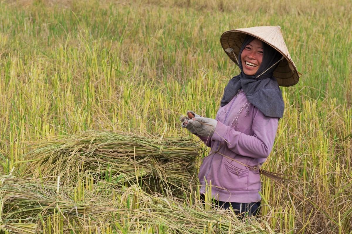 Femme dans une rizière au Laos