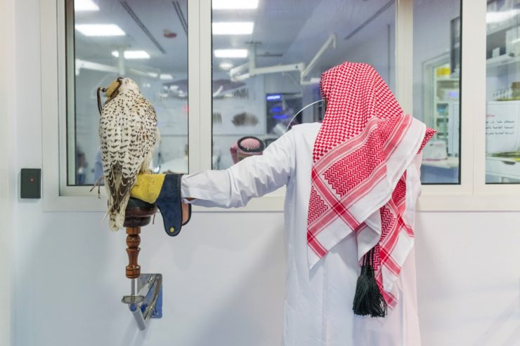 Falcon hospital de Doha