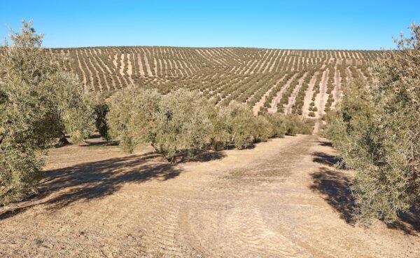 Itinéraire en Andalousie