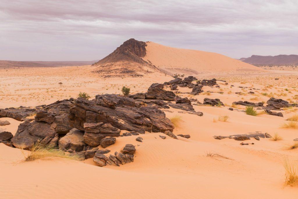 Chatou en Mauritanie dans l'Adrar