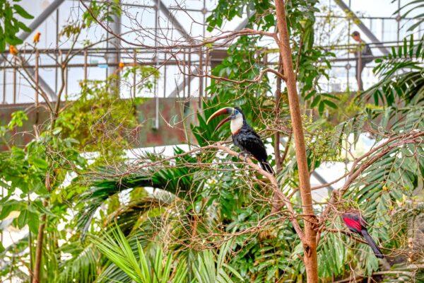Activité à faire : Green Planet Dubai