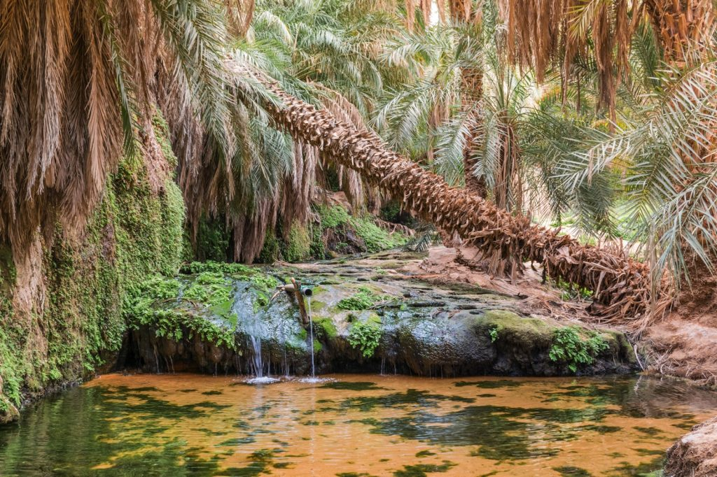 Source d'eau dans l'oasis de Tergit