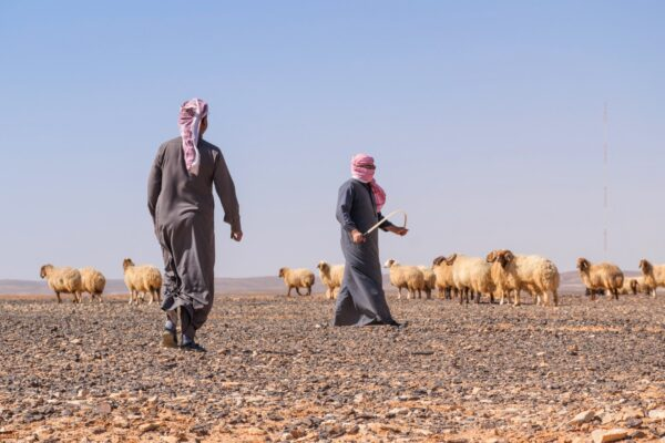 Voyage en Jordanie : bergers