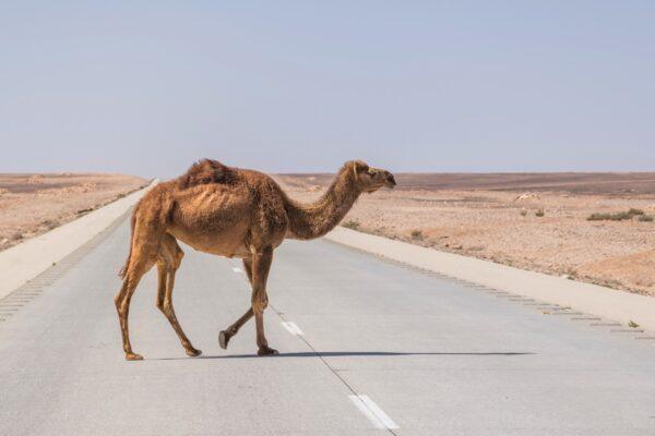 voyage en jordanie conseils itin raire pour un road trip en jordanie. Black Bedroom Furniture Sets. Home Design Ideas