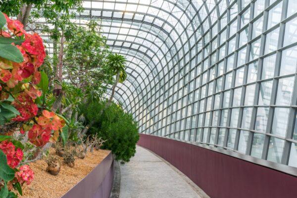 Flower dome à Singapour