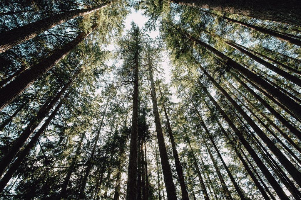 Sequoia NP en Californie
